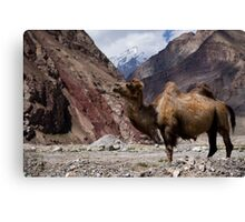Camel on the Karakoram Highway Canvas Print