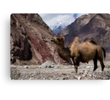 Camel on the Karakoram Highway Canvas Print