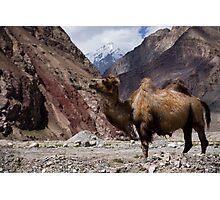 Camel on the Karakoram Highway Photographic Print