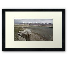 Camel at Lake Kara Kul Framed Print