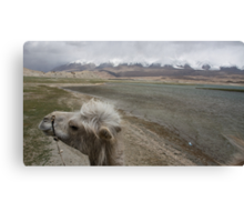 Camel at Lake Kara Kul Canvas Print