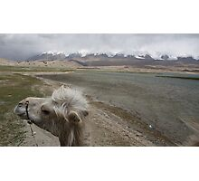 Camel at Lake Kara Kul Photographic Print