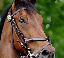 Horse Sense by David Morgan