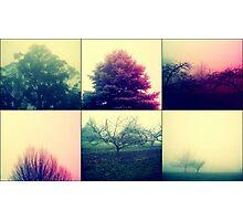 Foggy Impact Photographic Print