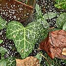 The Ivy, The Web, and The Rain by MotherNature