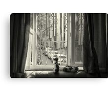 Kittens in Istanbul  Canvas Print