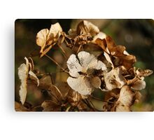 Dried out beauty 2 Canvas Print