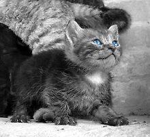 Kitten 'Ol Blue Eyes' by redph