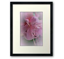 Fluffy Pink Clouds Framed Print