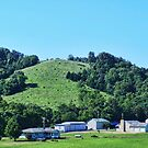 A Missouri Cattle Farm in Summer by barnsis