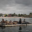 Sea lions haul out, Galapagos by Stephen Colquitt