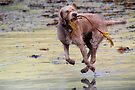 Airborne dog by SWEEPER