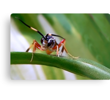 Wasps Are Our Friends Metal Print