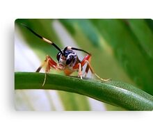 Wasps Are Our Friends Canvas Print