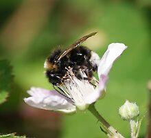 Humble Bumble Bee by LorrieBee