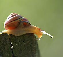Snail's pace by LorrieBee
