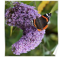 Ah, Nectar! Poster