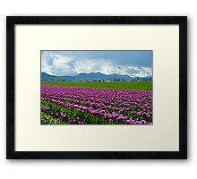 Skagit Tulip Fields Framed Print