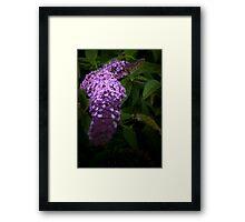 Buddleia Framed Print