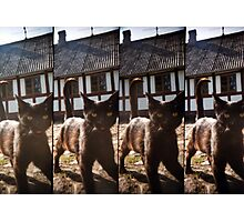 Lomo Cat Photographic Print