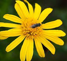 That Yellow Flower is mine by Helder Ferreira