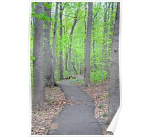 Spring forest  in Virginia Poster