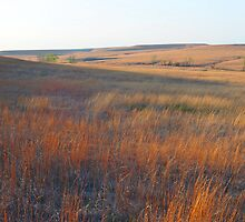 Tall Grass Prairie - Kansas by michael6076