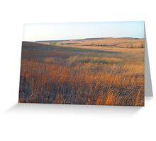 Tall Grass Prairie - Kansas Greeting Card