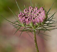 Pink Flower with thorns by Helder Ferreira