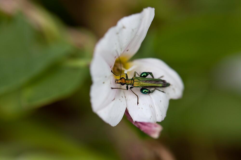 Green bug by Helder Ferreira