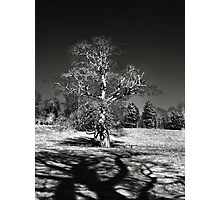Infra red Oak  Photographic Print