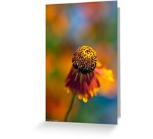 A little Sneezeweed Blossom Greeting Card