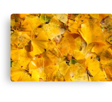 Ginkgo biloba leaves Canvas Print