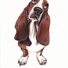 Beautiful Basset Hound Looking for a Forever Home by Rebecca Rees