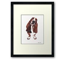 Beautiful Basset Hound Looking for a Forever Home Framed Print