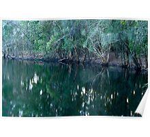 Wetlands Habitat with Sacred Kingfisher Poster