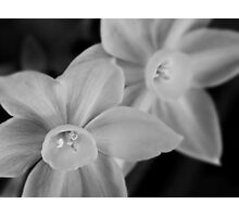 Ethereal paperwhite blossoms Photographic Print