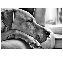 Waiting for my master Photographic Print