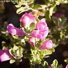 Busy Little Bee by thruHislens .