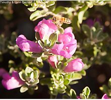 Busy Little Bee Photographic Print