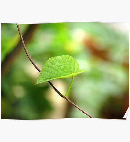 Solitary leaf. Poster