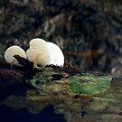 Mushrooms - Umbrella for the ants. by Shiju Sugunan