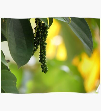 Pepper with yellow and green background Poster