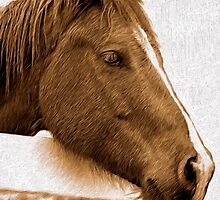 A Horse with No Name by Doreen Erhardt