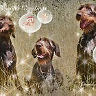 CC111 - German Wire Haired Pointer by zitavaf