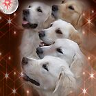 CC113 - Golden Retrievers by zitavaf