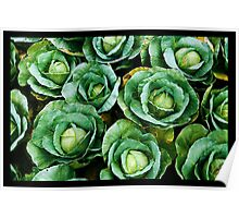 array of cabbages Poster