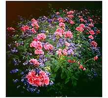 butchart gardens, victoria, bc by scott hamilton