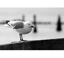 resting on the boardwalk Photographic Print