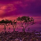 """""""Evening on Airlie"""" by Phil Thomson IPA"""